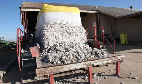 Raw cotton bales ready to enter the ginning facility, where the white fiber will be separated from the seeds.