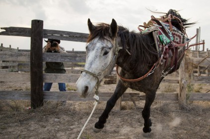 The movie Unbranded delves into the plight of wild horses and burros on Western land. (Image courtesy of Unbranded)