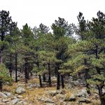Colorado Forests Ripe For Major Wildfire, Despite Efforts To Increase Prevention Funding