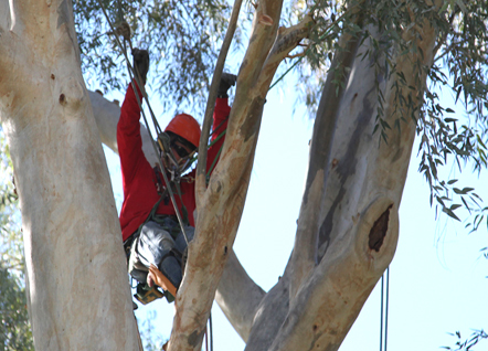 Tree Workers a Tight Community of Serious Competitors