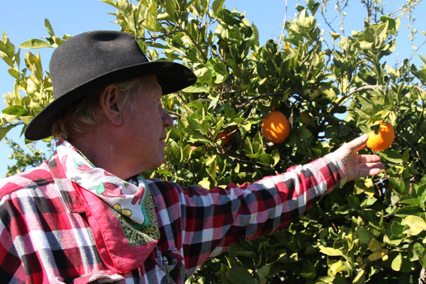 Man reaches for orange on tree